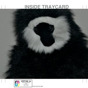 Testy Gecko - Blue 13 CD Tray Inside